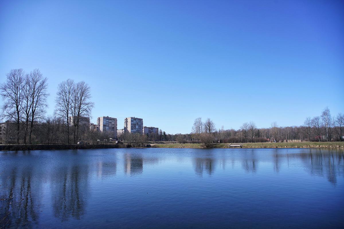 Фото пруда. На фоне - деревья без листвы, голубое небо, желтая трава и многоквартирные дома