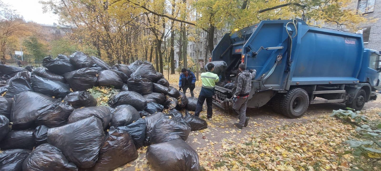 Уборщики подрядной организации МО Светлановское убирают мешки с мусором и листвой в мусоровоз в рамках осеннего месяца благоустройства